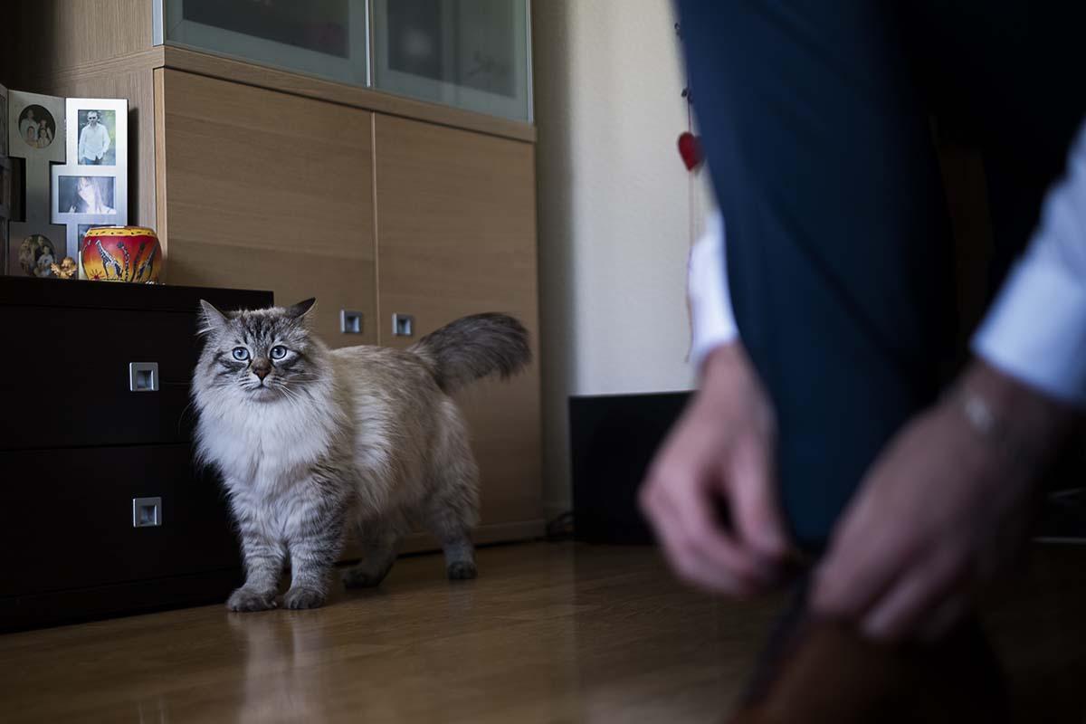 Curieux ce chat se demande pourquoi il y a tant d'agitation-photographe-mariage-alsace